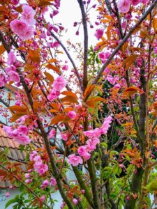 wiosna masza grander kogel mogel blog
